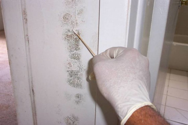 by Mold Inspection & Testing Houston TX