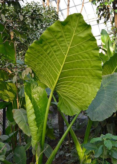 Plantes tropicales riches en azote for Plantes tropicales d interieur