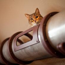 DIY: Ein Transitsystem à la Steampunk nur für Katzen