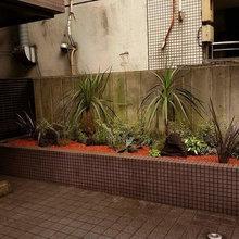 小さな植栽スペース