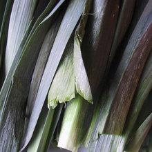 Cool-Season Vegetables: How to Grow Leeks