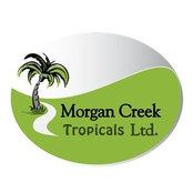 Morgan Creek Tropicals Ltd's photo