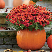 DIY Fall Projects for your Garden