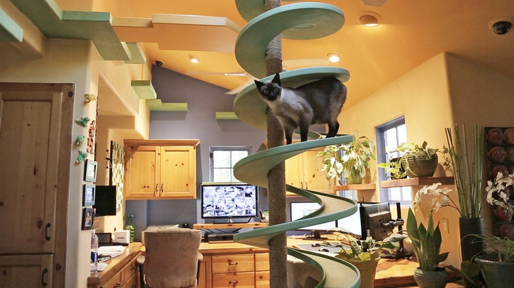Incredible Home Catwalks Make for Purr-fectly Happy Felines