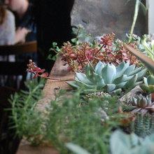 Азбука растениевода: Капризные цветы и условия их содержания