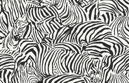 Zebra BC1581354 Wallpaper