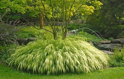 Best looking 4 39 perennial grass for Grass looking shrubs