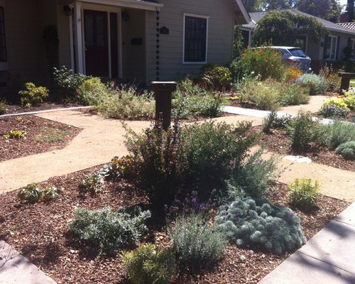 Formal garden with low water plants for Low water landscaping plants