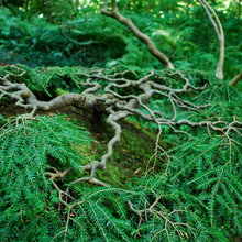 evergreen overflow