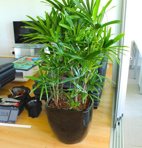 Plantes d 39 int rieur en hydroculture for Plantes dinterieur