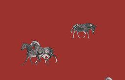 Zebra's Wallpaper