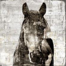 Molina - Horses