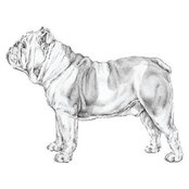 Bulldog Capital Development, LLC's photo
