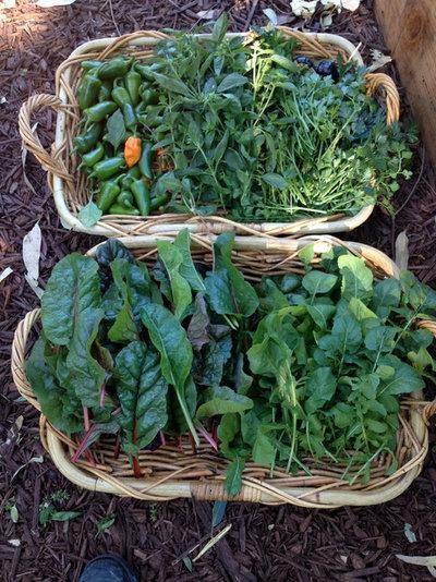 Contemporaneo  by StartOrganic Vegetable Garden Service