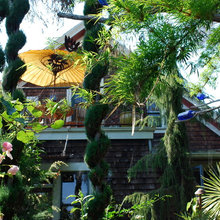 Designing With Conifers: How to Unite Your Landscape