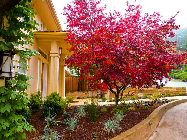 great trees for summer shade and fall color