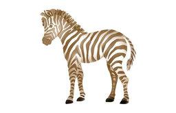 Small Baby Zebra Stencil
