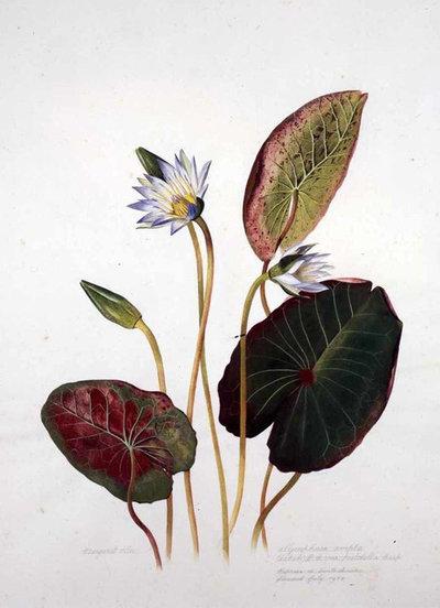 Brazil: A Powerhouse of Plants