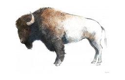 """Colorful Bison Dark Brown"" Digital Paper Print by Avery Tillmon, 30""x24"""