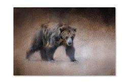 Jai Johnson 'Young Grizzly Bear' Canvas Art, 32 x 22