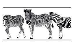 Zebra Border