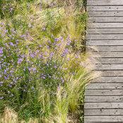 Foto von Förder Landschaftsarchitekten GmbH