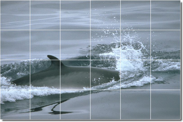 Dolphins whales photo wall tile mural 103 traditional for Dolphin tile mural