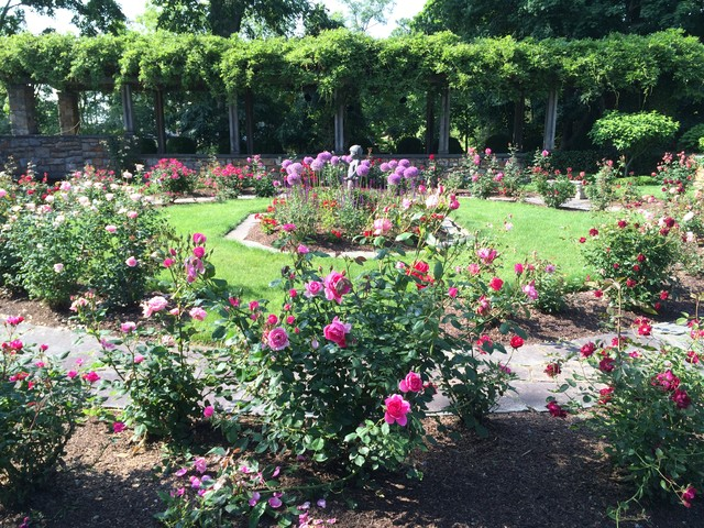 English Rose Garden In Connecticut By Gardens And Designs LLC