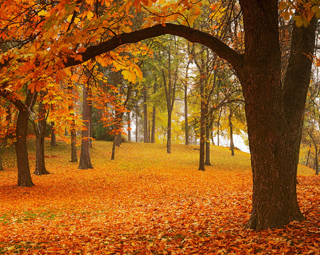 Manito park autumn wall mural rustic wall decals by for Autumn forest mural