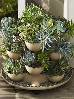 Patio Porch Garden Planter With Cactus Eclectic