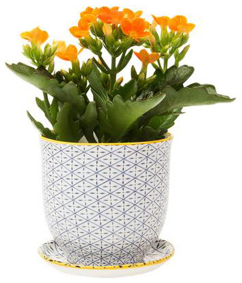 Brighton pot and saucer planter blue cross contemporary indoor pots and planters by dot bo - Indoor plant pots with saucers ...