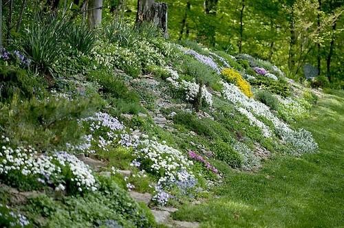 Stephanotis and star jasmine questions - The garden web forum ...