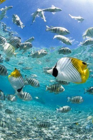 Tropical fish in bora bora lagoon wall mural 18 inches h for Bora bora wall mural