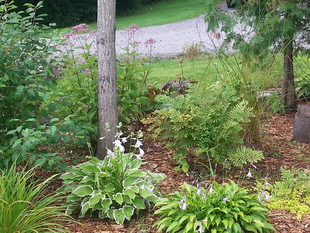 low maintenance perennial gardens traditional other