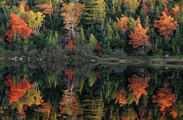 Autumn trees reflection on still waters wallpaper wall for Autumn tree mural