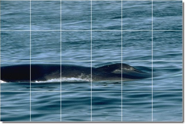 Dolphins whales photo wall tile mural 17 traditional for Dolphin tile mural