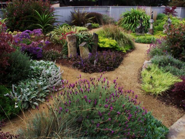 Stinson Beach Succulentgrass garden