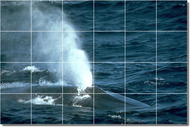 Dolphins whales photo backsplash tile mural 20 for Dolphin tile mural