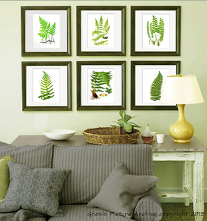 Set Of 6 Botanical Fern Antique Prints Reproduction Wall