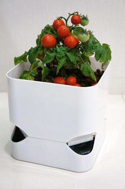 Cubepot Self Watering Planter