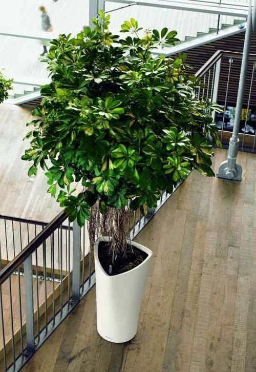 Which tall potted plants are great for indoor use in shady areas - House plants that like shade ...