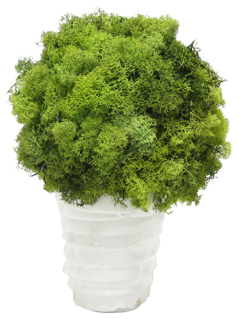 White Ceramic Vase, Reindeer Moss Topiary Ball - Contemporary - Artificial Plants And Trees - by ...