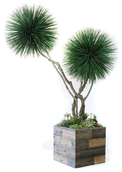 8 39 preserved double dracena tree with curvy trunks and succulent garden eclectic artificial - Flowers that grow on tree trunks ...