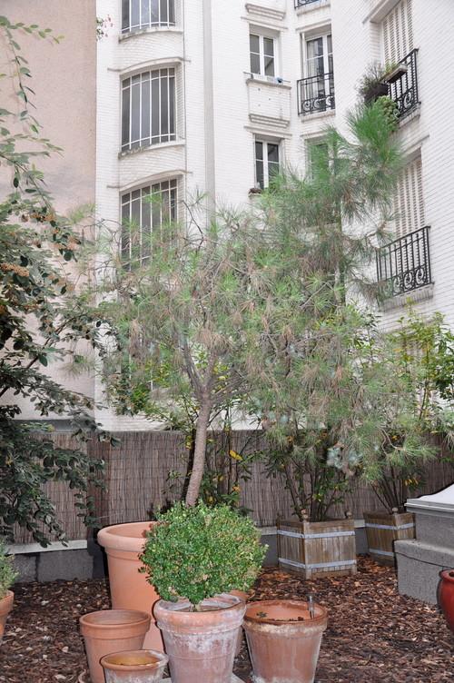 Un jardin zen for Decoration zen jardin
