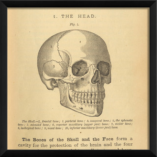 Skull Bathroom Sink : LF Physiology Skull Print - Contemporary - Prints And Posters - by The ...
