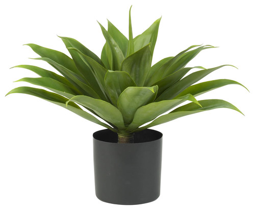 Outdoor potted plant for modern patio entertaining?