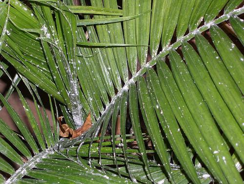 Amazoncom 7 Foot Lighted Palm Tree  300 Lights  Indoor