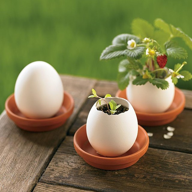 Organic Strawberry, Mint & Petunia Plant Egglings - Eclectic - Indoor Pots And Planters - by ...