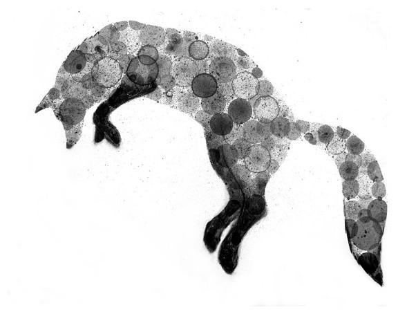 Fox Bubble Print By Vizart Contemporary Artwork By Etsy