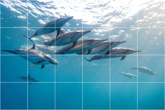 Awesome Rennara39s Dolphin Mural Bathroom Tiles